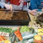 Growing Seedlings for your Veggie Garden