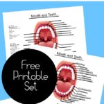 Human Tooth Names ~ Free Labeling Printables