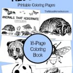 Animals that Hibernate in Winter Printable Coloring Book